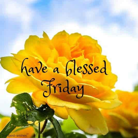 110+ Beautiful Good Morning Wishes for Friday | Best Images